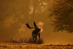 Knole - National Trust this autumn with its majestic herd of more than 350 wild deer: http://nattru.st/57c53