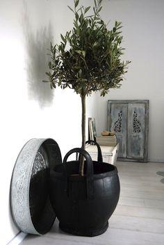 House of Philia: Indoor Olive Tree Patio Interior, Home Interior, Interior Styling, Interior Design, Indoor Olive Tree, Faux Olive Tree, Planter Olivier, Olivier En Pot, Growing Olive Trees