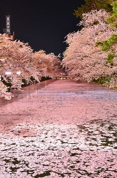 Cherry blossoms float, Hirosaki Castle, Aomori, Japan il paese incantato