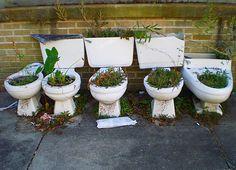 Toilet gardening!? Arrg!