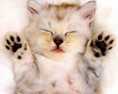 gatinho bonitinho - Pesquisa Google