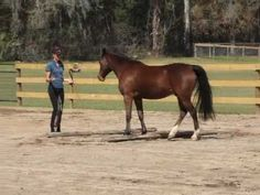 Karen Rohlf playing with her pony...very cool :)