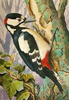 Great spotted woodpecker by Charles Tunnicliffe
