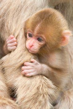 Baby Animals Super Cute, Cute Little Animals, Cute Funny Animals, Baby Animals Pictures, Cute Animal Photos, Animals And Pets, Wild Animals, Primates, Baby Monkey Pet