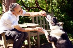 Seven truths only dog owners know - and why they make us wiser humans dogsfest Dog Owners, Truths, Dogs, How To Make, Pet Dogs, Doggies, Facts