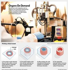 Researchers and Companies such as Organovo are using three-dimensional printers to produce living tissues, hoping some day to be able to print personalized body parts
