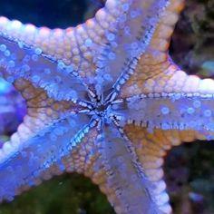 Beautiful Sea Creatures, Deep Sea Creatures, Animals Beautiful, Underwater Creatures, Underwater Life, Sea Plants, Water Animals, Unique Trees, Beautiful Ocean