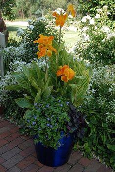 Canna lily, lobelia(?), Heuchera