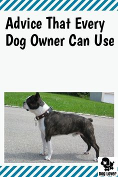 When It Comes To Dogs, We Have Items #petdogs Pet Dogs, Dogs And Puppies, Pets, Dog Care Tips, Pet Care, Dog Training Tips, Dog Owners, Boston Terrier, Your Dog