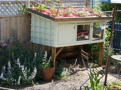 Rabbit hutch with strawberry plants on top