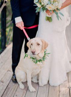 Sweet lab: http://www.stylemepretty.com/missouri-weddings/2015/02/23/traditional-ballroom-wedding-10/ | Photography: Jordan Brittley - http://jordanbrittley.com/