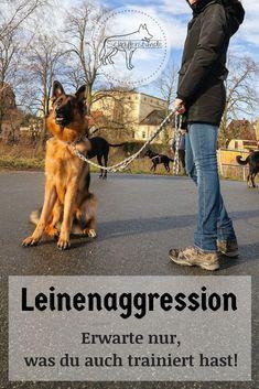 Deutscher Schäferhund   Leinenaggression   Hundebegegnung   Hundeaggression   Hundekontakt   Hundeerziehung   Gassi