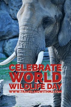 Today, March 3rd, is UN World Wildlife Day. The UN General Assembly made this proclamation four years ago as a way to celebrate and raise awareness of the world's wild animals and plants.