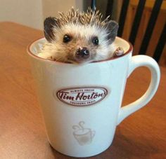 Someone spiked my coffee