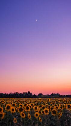 Tumblr Wallpaper, Cute Galaxy Wallpaper, Minimal Wallpaper, Iphone Background Wallpaper, Aesthetic Pastel Wallpaper, Scenery Wallpaper, Aesthetic Backgrounds, Nature Wallpaper, Aesthetic Wallpapers