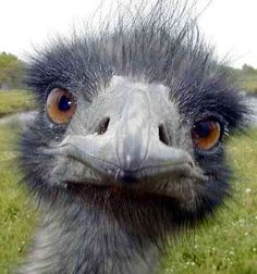 Picture of Edward the Emu!