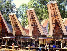 Big Torajan funerals in tongkonan houses in Sa'dan. The number of sacrificed porks lying on the ground was impressive.  Longues funérailles Toraja dans les tongkonans de Sa'dan. Un nombre impressionnant de cochons sacrifiés gisaient au sol. http://po.st/6AKMRY