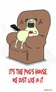 It's the pug's house we just live in it. Ha!