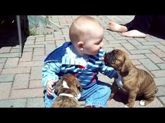 So cute!  Baby with boxer puppies