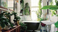 Top 5 plante perfecte pentru baie