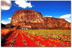 Cultivo de tabaco. con los Mogotes al fondo. Vinales, Cuba, Monument Valley, Vineyard, Nature, Travel, Outdoor, Natural Playgrounds, Country