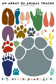Pop Chart Lab: This poster presents a parade of prints from beasts and birds from the very large to the very small! Each foot-, hoof-, paw-, or claw-print is rendered at real-life size, so you can see how you measure up. Animal Footprints, Wild Kratts, Animal Tracks, Footprint Art, Framed Prints, Art Prints, Animal Prints, African Animals, Jungle Animals