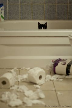 Haha! The toilet paper must've attacked first!