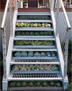 Just about zero maintenance, next to no water, but these succulents certainly improve the look of these industrial stairs, don't you think?