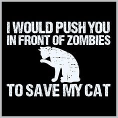 I would push you in front of zombies to save my cat Stranger Things Creature, Crazy Cat Lady, Crazy Cats, Black Flowers, Cat Quotes, Cute Memes, Cat Shirts, Cat Love, Funny Cats