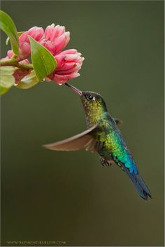 Amazing Colours of Hummingbirds Such a privilege to have an opportunity to enjoy nature in Costa Rica.