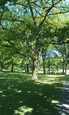 Uni parken Aarhus, Uni, City, World, Plants, Cities, The World, Plant, Planets
