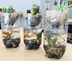 Want to try hands-on gardening in your classroom? Check out these classroom gardening ideas for great project-based learning and science experiments. Preschool Science, Science Fair, Science For Kids, Science Activities, Ecosystem Activities, Science Experiments, Forensic Science, Science Ideas, Elementary Science
