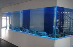 791 Best Fresh Salt Water Fish Bowl Tanks Aquarium Images