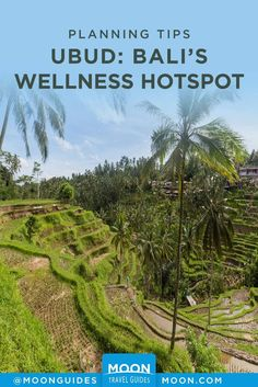 Ubud is the spiritual epicenter of Bali and the best place to go for peaceful retreats, fitness vacations, and detoxes. Here's what to do for your most healthy day possible in Ubud, a Bali wellness bucket list, and the best yoga spots in town. Bali Lombok, S Spa, Detox Program, Recreational Activities, Restorative Yoga, Travel Articles, South Pacific, Best Yoga, Ubud