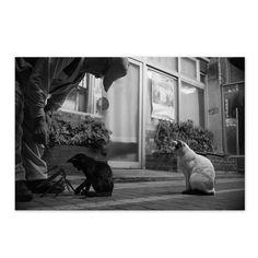 https://flic.kr/p/y8hqzr   BLK Kid and Mayu September 2015  #cat #smallcats #blackandwhitephotography