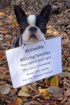 Give back this holiday to help the homeless dogs and cats in your community. #GivingTuesday is the opportunity to be part of solutions. Visit our webpage at www.yakimahumane.org and make a difference today! Give Thanks. Give Love. Give Hope.
