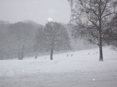 Graves Park, Sheffield.