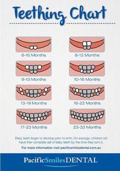 Baby teeth diagram Baby teeth chart - Baby Development Tips Baby Trivia, Baby Teething Chart, Tooth Chart, Baby Life Hacks, Baby Information, Baby Schedule, Baby Feeding Schedule, Shower Bebe, Baby Kind