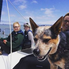 Love the symmetry of this photo. Brody Dog Star of the show on a private sailing charter on San Francisco Bay. Rent a yacht or sailboat with captain. #goldengatebridge #captainsanfrancisco #sailingboat #ghirradelli #giantsstadium #sausalito #sf #sfbay #sfs #sfsailingscenes #sfsailing #sfsail #p #pier39 #picoftheday #photographer #photooftheday #sftour #sftrip #sfthreads #sfthingstodo #sfthingtodo