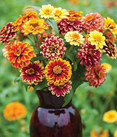 More fantastic zinnias that I will just have to plant next season.
