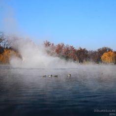 Kacsákok. #városliget #ducks #lake #city #park #autumn #budapest #momentsinbudapest #canonhun  #canonglobal #dslr #nofilter #oriandras