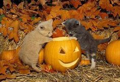 kittens and a pumpkin