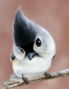 Un petit oiseau sur une branche