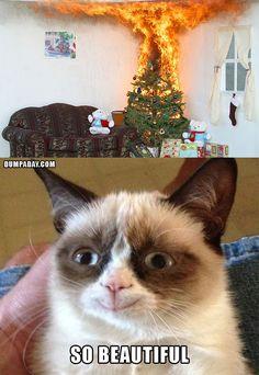 grumpy cat christmas, christmas tree on fire, grumpy cat is happy