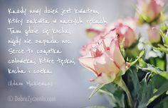 Każdy nowy dzień jest kwiatem, który zakwita w naszych rękach