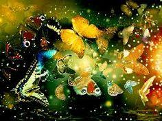Butterflies ... looks great