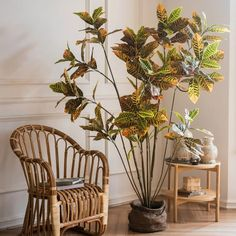 Large Leaf Artificial Croton Tree – RusticReach Potted Trees, Trees To Plant, Yellow Plants, Single Tree, Decorative Planters, Artificial Tree, In The Tree, Rest Of The World, Terracotta Pots