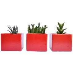 Materas rojas con plantas naturales Set x 3 by Habibi   $81.000 COP