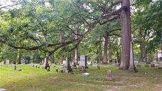 Salt Lake City, Present Day, Cemetery, Irish, Plants, Summer, Summer Time, Irish Language, Plant