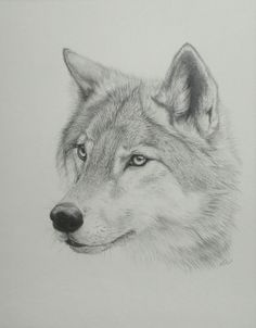 Wolf Drawing Wolf drawing. by ~pandaz333 on